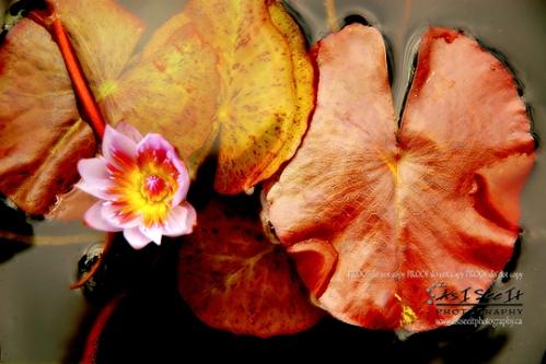 calgaryphotographerasiseeitphotography39.jpg